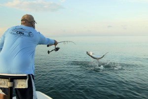 Cliff Ondercin, from Sarasota, FL, and his dad, Dennis Ondercin, from OH, had great action jumping numerous tarpon and landing several on DOA Baitbusters and live baits while fishing the coastal gulf in Sarasota with Capt. Rick Grassett last week.